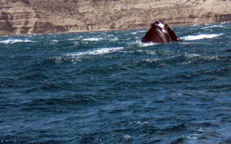 Península Valdés (Chubut)