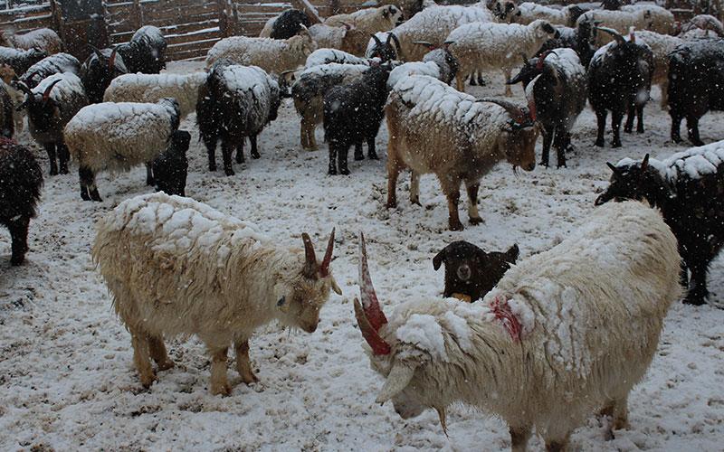 curisositats de mongolia, neu al desert del gobi
