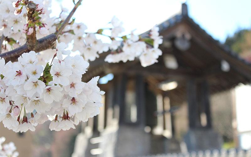 Shibu Onsen (Japó)