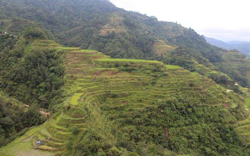 terrasses d'arros banaue Luzon