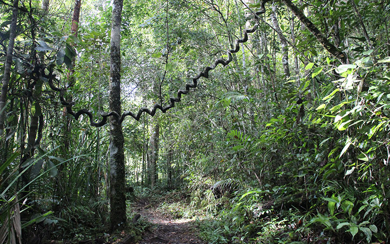 Kinabalu Park (Malàisia)