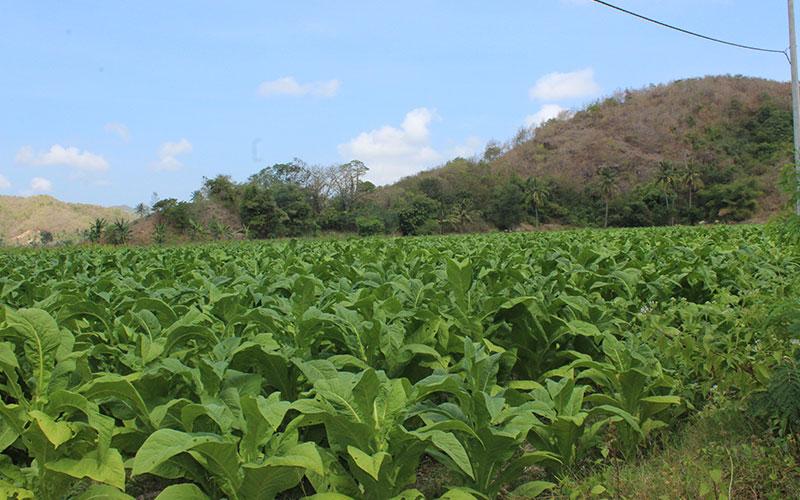 visitar Lombok tabac