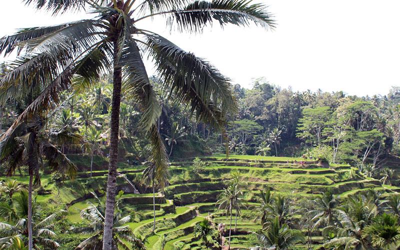 terrasses arros bali indonesia