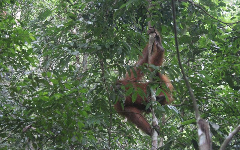 visitar selva illa sumatra