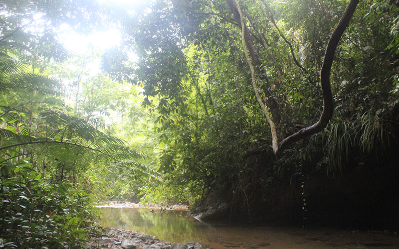 visitar selva sumatra
