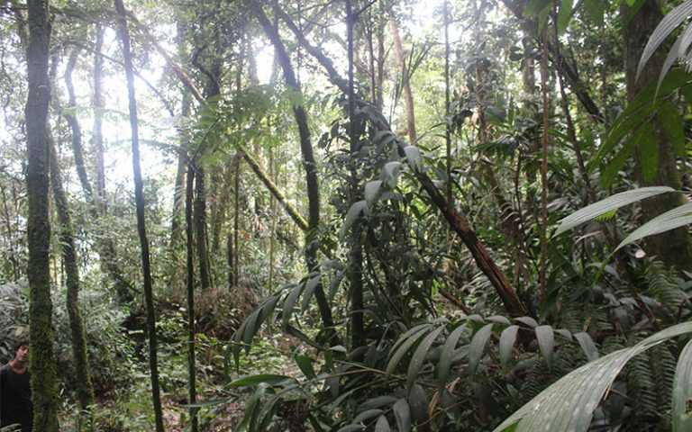 Cameron Highlands (Malàisia)