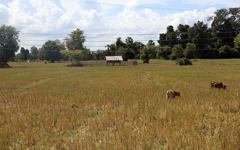que fer a les 4000 illes Laos