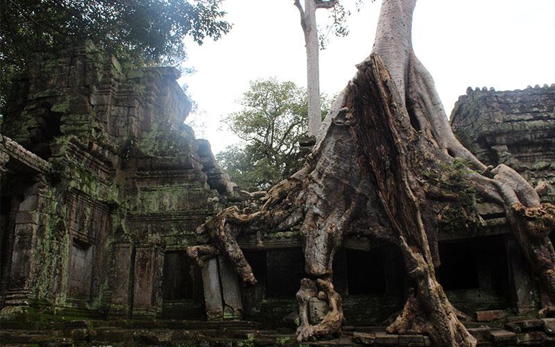 temple de lara croft Temples d'Angkor Cambodja