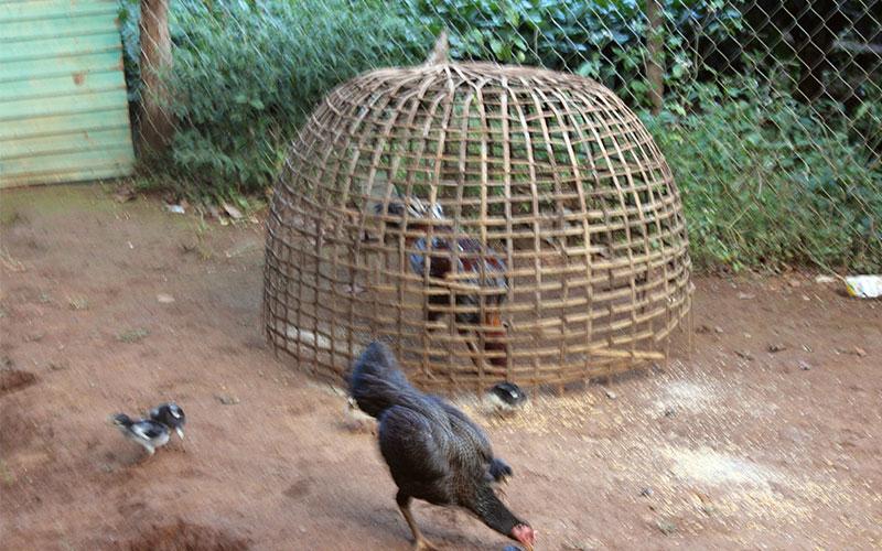 la vida a Laos