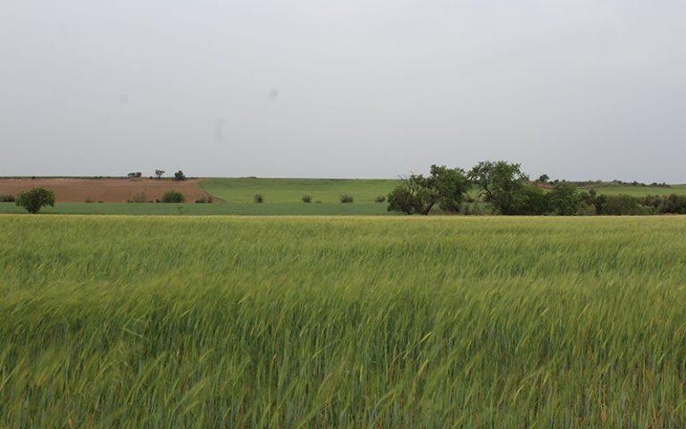 Artesa de Lleida (Segrià)