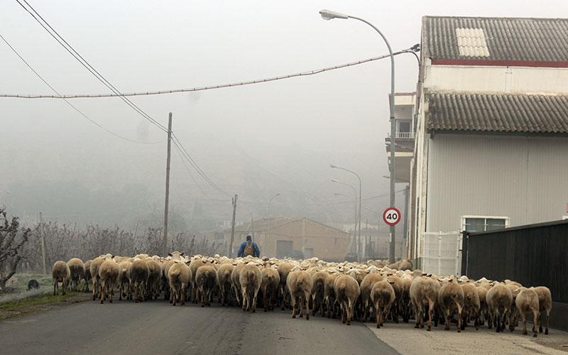 rural segria