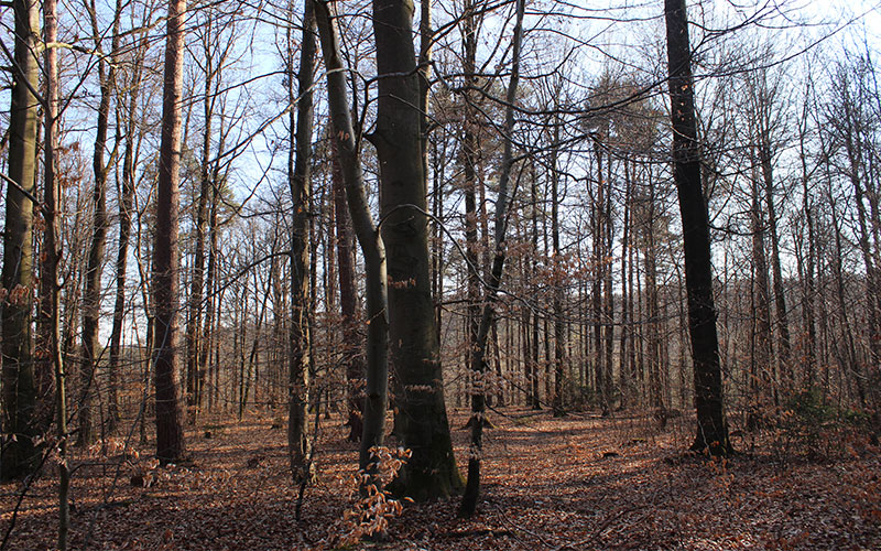 bosc Stuttgart natura tot l'any